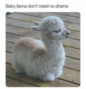 don't be a drama llama